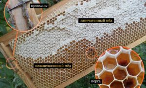 Незапечатанный мед