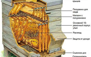 Пчелиные ульи – их устройство и особенности