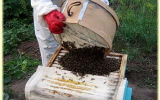 Кормление пчел в августе – как делать правильно