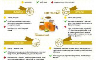 Что известно о пчелах бурзянской породы
