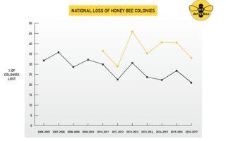 Потери национального пчеловодства соединенных штатов в 2016-17 году составляют 33%