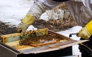 Подкормка пчел на зиму
