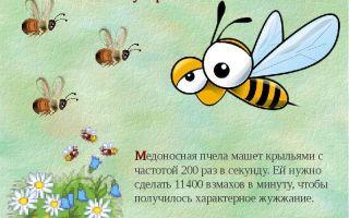 О пчелиной пользе слагают легенды