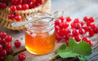 Мед и калина – рецепты здоровья и красоты