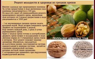 Грецкие орехи с медом: биологическая ценность, полезные свойства, рецепты приготовления