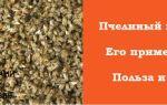 Как следует принимать пчелиный подмор с пользой для здоровья