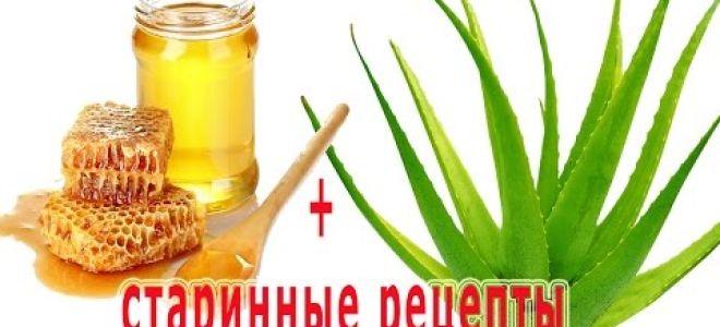 Алоэ с медом: полезная комбинация от кашля