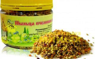 Пыльца пчелиная для мужчин – в чем секрет пчелопродукта?