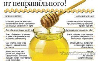 Как нужно правильно употреблять мед