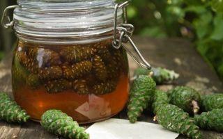 Мёд из сосновых шишек: состав, польза, приготовление