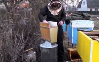 Обработка пчел на зиму