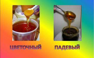 Польза и вред падевого меда