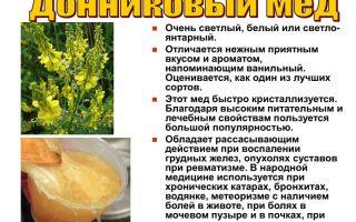 Какие целебные свойства имеет мед донник