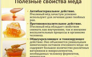 О полезных свойствах меда