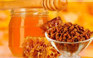 Медовая перга – вкусно, полезно и целебно