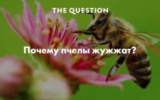 Почему пчелы жужжат?