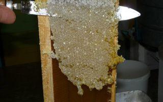 Прицеп для пчел: особенности, требования и самостоятельное изготовление