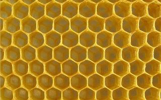 Почему пустые пчелиные соты