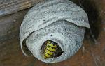 Что такое мед для пчел