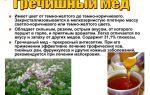 Гречишный мед и его свойства