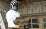 Как эффективно уничтожить гнездо шершней или ос?