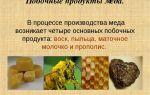 Роль ивы в производстве меда