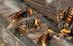 Правила содержания пчел на приусадебных участках и населенных пунктах