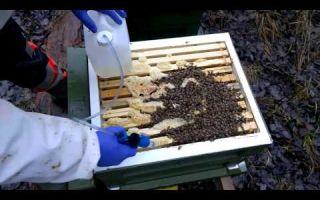 Обработка пчел при помощи щавелевой кислоты