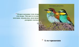 Почему птицы едят пчел