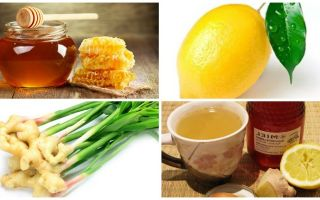 Имбирь, мед и лимон – поддержка иммунитета силами природы