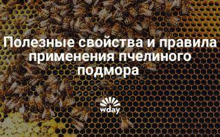 Эффективное применение пчелиного подмора для женщин