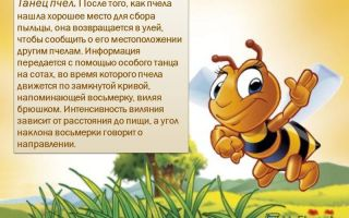 Загадка танца пчел