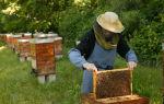 Как завести пчел на даче: инструкция для начинающих
