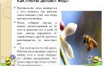 Использование меда в женском лечении