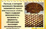Целебные рецепты с пергой и медом
