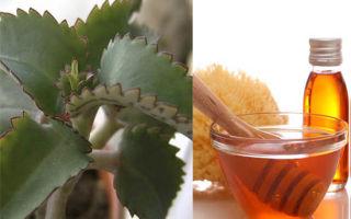 Здоровье – дело наживное, когда есть мед и каланхоэ!