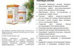 Сосновая пыльца: польза и применение в народной медицине