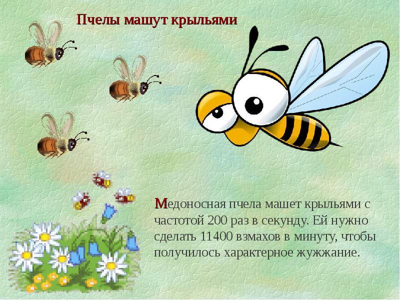 Рассказы о пчелах детям в картинках