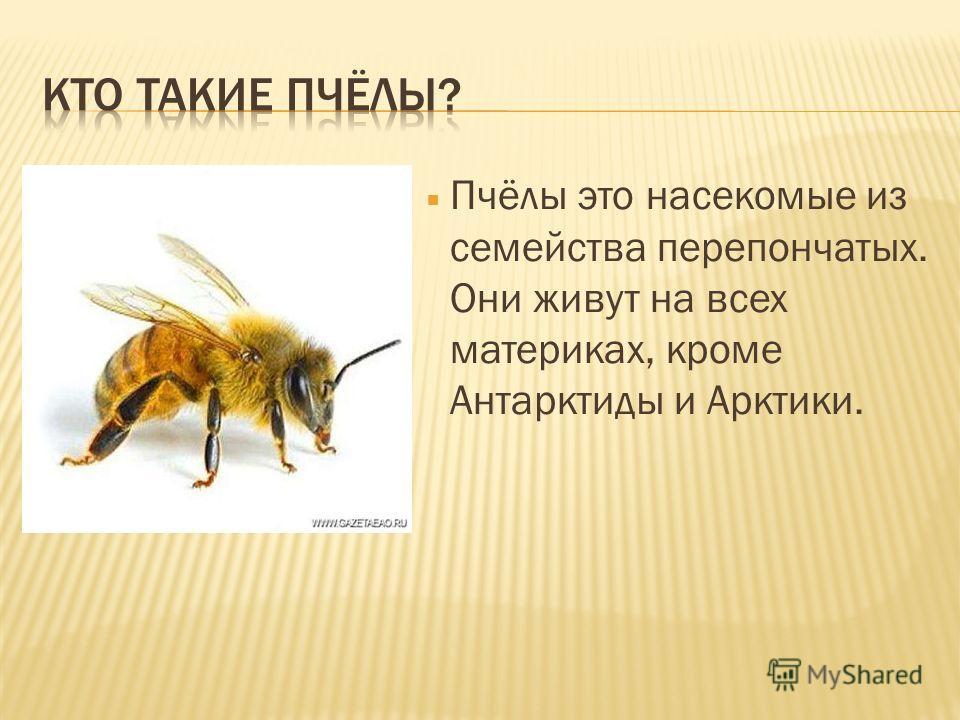Информация о пчелах с картинками